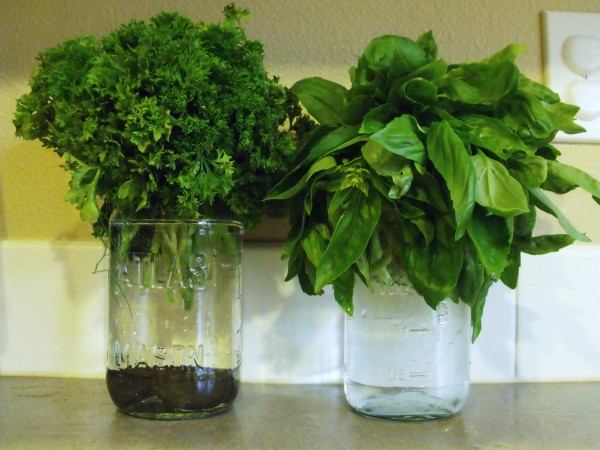 Basil and Italian Parsley