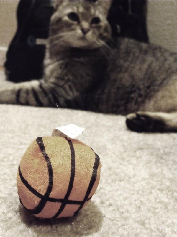 Chloe and her stupid basketball