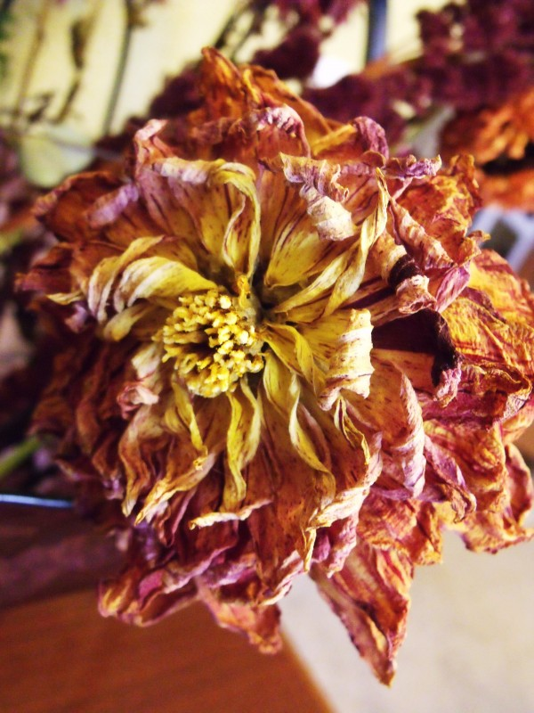 Beautiful dried flower