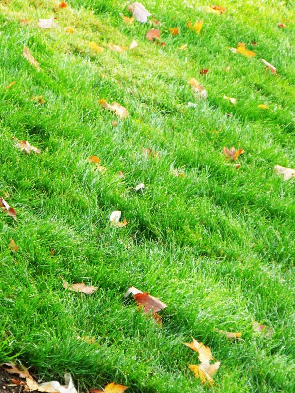Dew-y grass